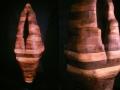 Phenotype (with detail), Cedar, Steel, 320 x 120 x 110 cm, 2001